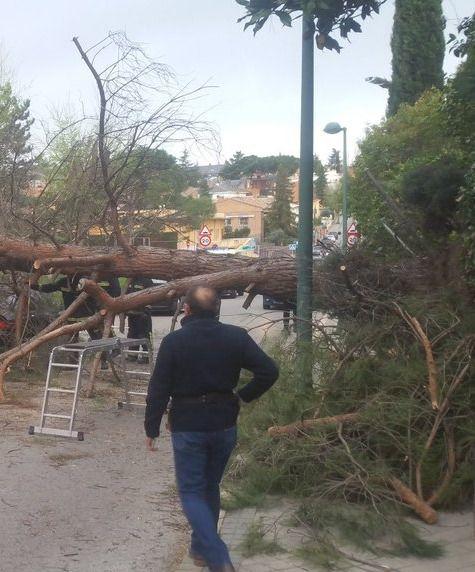 El Ayuntamiento habilita un servicio especial para la recogida extraordinaria de los restos de árboles afectados por Filomena