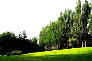 Los árboles de Pozuelo... a revisión