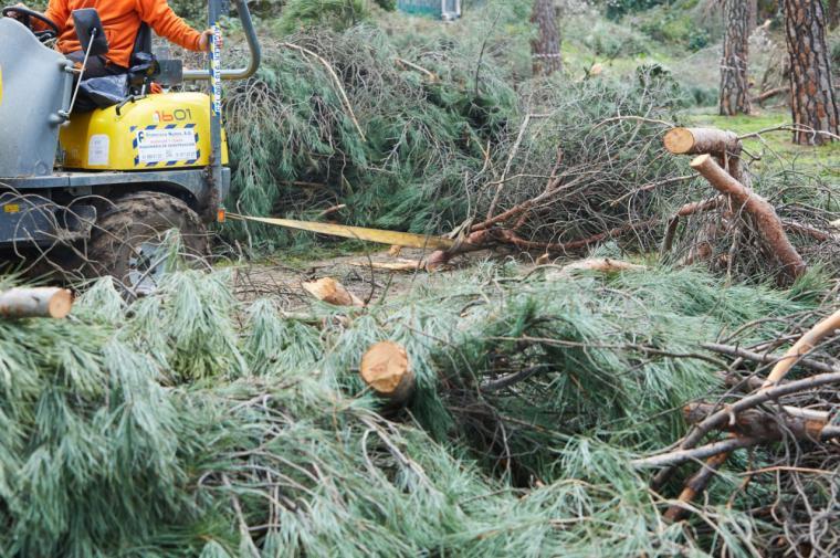 El Gobierno municipal retirará alrededor de 10.000 toneladas en el marco del Plan de Gestión Integral del Resto Vegetal