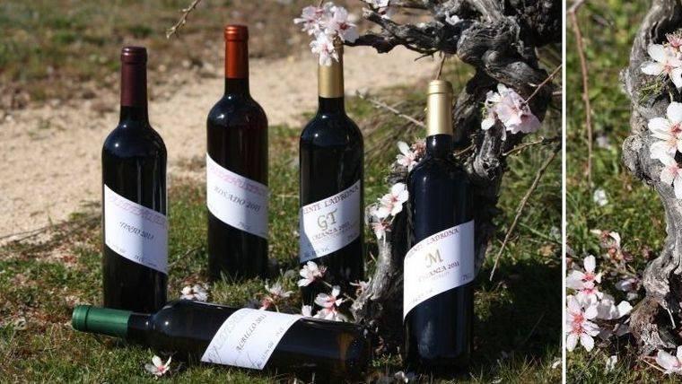 Descubre los vinos de la bodega Alberto Ayuso en Pozuelo