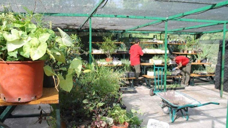 ¿Sabes que Pozuelo tiene Guardería de Plantas?