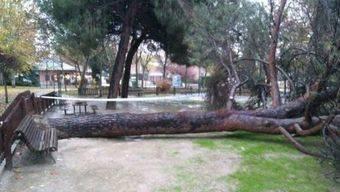 Somos Pozuelo se pronuncia sobre la caída de árboles en el municipio