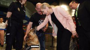 Cifuentes celebra el éxito del acceso de los perros al Metro, más de 135.000 en un año