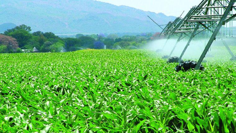Innovación y nuevos perfiles profesionales en el sector agrícola