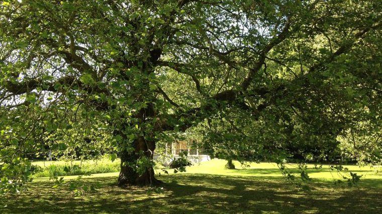 Las zonas verdes de Aravaca se renovarán en 2018