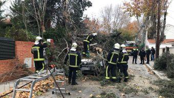 Un árbol cae sobre una furgoneta en Pozuelo