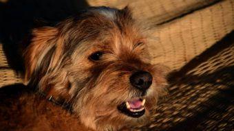 El Ayuntamiento de Pozuelo de Alarcón pondrá en marcha la construcción de un centro de protección animal