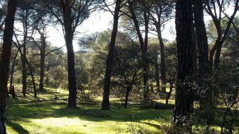 Ciudadanos y PP impiden una mayor protección del Monte de Pozuelo