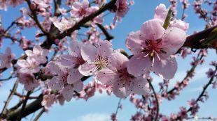 La primavera, la agenda altera