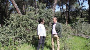 El Ayuntamiento de Pozuelo de Alarcón estudia las posibles actuaciones a desarrollar en la Finca el Maisán