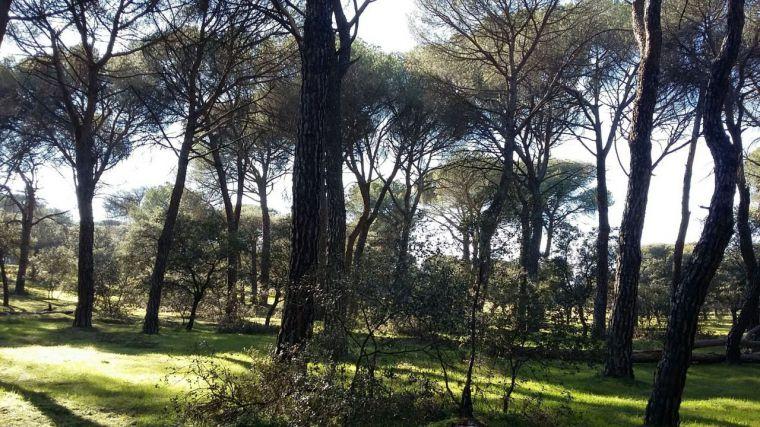 El Grupo Popular en el Ayuntamiento propone iniciar trámites para incorporar el Monte de Pozuelo al patrimonio municipal