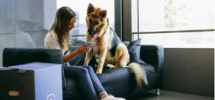 Actividades, salud y juegos desde casa: cómo mantener activo a tu perro durante la cuarentena