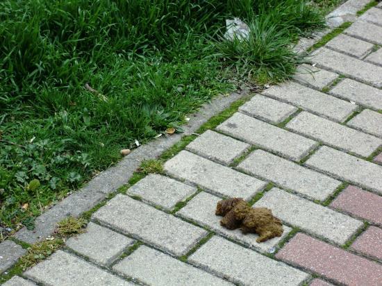 Plan de choque contra los excrementos caninos en Moncloa-Aravaca