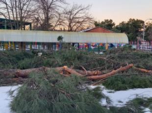 Somos Pozuelo pide un plan urgente para recuperar el arbolado del municipio