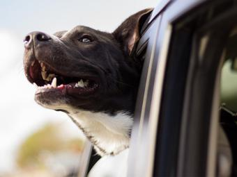 ¿Qué se debe limpiar en un coche donde viajan perros?