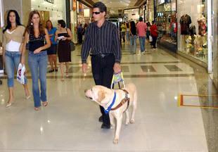 Los perros guía de personas con discapacidad podrán entrar en los transportes, comercios, colegios u hospitales