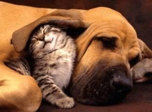 Comienza la campaña de identificación y vacunación contra la rabia para perros y gatos