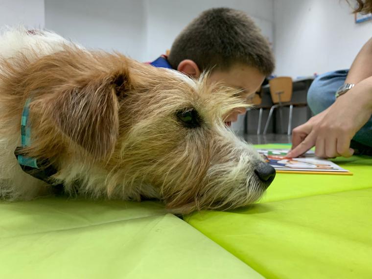 Las intervenciones asistidas con animales y su efecto directo en el bienestar de las personas