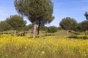 Pozuelo y la naturaleza en amarillo