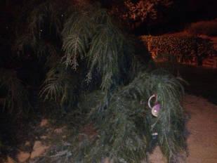Un árbol caído en Pozuelo
