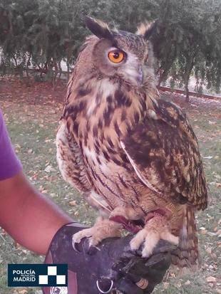 Rescatados 269 animales en el primer semestre del año