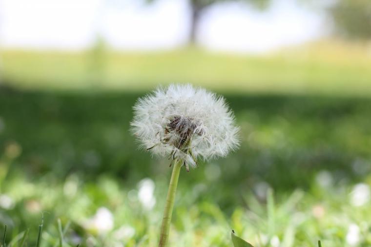 Habrá inversiones para mejorar la calidad del aire de Pozuelo de Alarcón