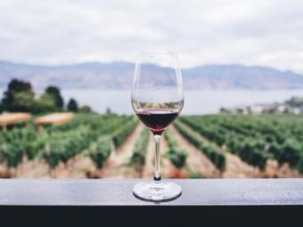 10 claves para entender el vino