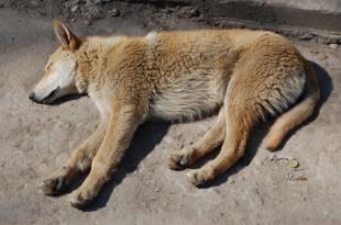 La Junta de Gobierno Local adjudica el nuevo contrato para el servicio de recogida y alojamiento de animales abandonados