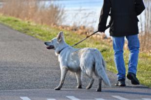 La Comunidad de Madrid recuerda que se debe pasear a los animales pero sin formar grupos de personas para evitar la transmisión del coronavirus