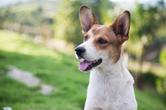 La Comunidad de Madrid registra 7.990 adopciones de animales domésticos en 2020, el mayor dato de su historia