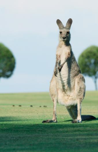 5 consejos esenciales para tus vacaciones en Australia