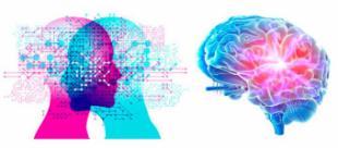 Mejora tu memoria y aprendizaje con la nutricosmética