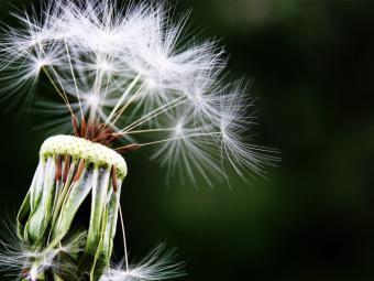 La primavera puede aumentar los casos de rinitis alérgica