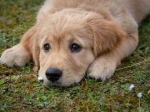 El 70% de los perros en todo el mundo no tienen hogar, según la Real Sociedad Canina