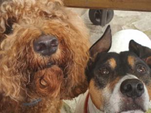 La demanda de adiestradores de perros se ha incrementado hasta un 80%