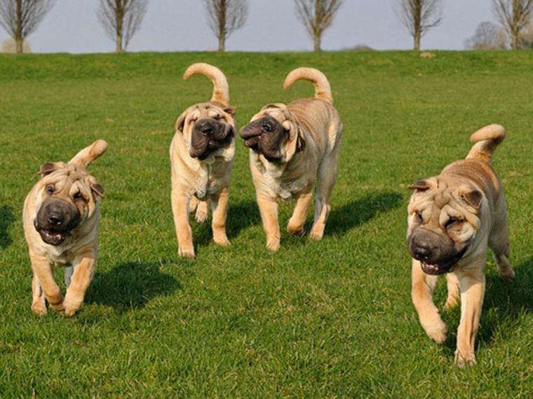 Se va a armar la Mundial…Canina: Madrid acogerá el evento más importante del sector del perro a nivel internacional